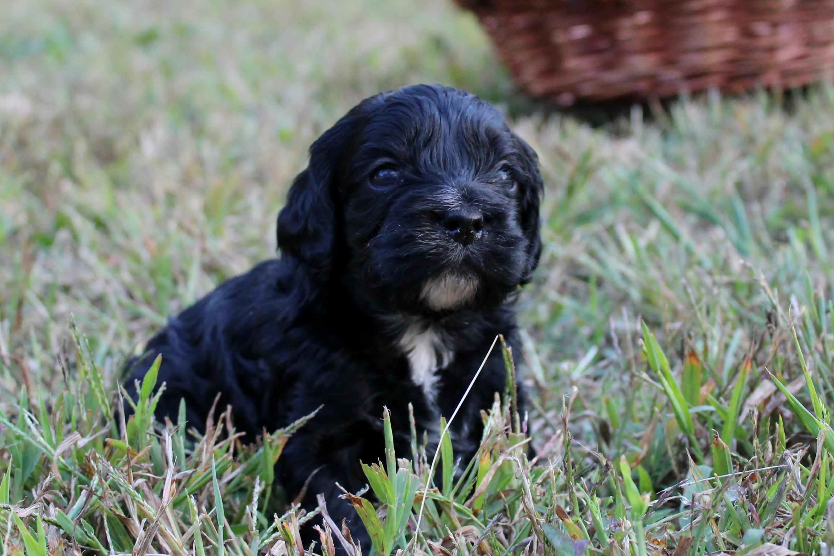 Choosing a Breeder   Eden Dog