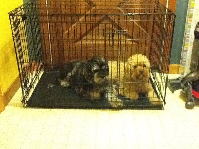crate with dogs