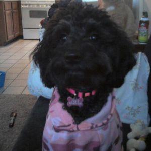 Josie is pretty in pink