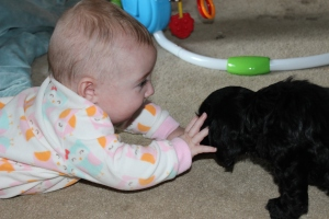 Gracie meets puppy (6)