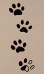 paw prints 003