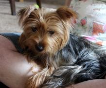 Sammy (1)
