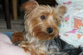 Sammy (2)