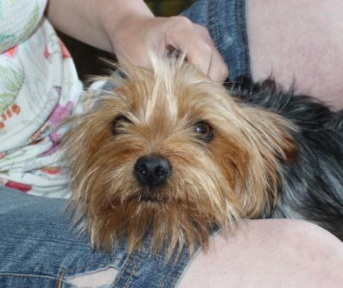 Sammy (4)