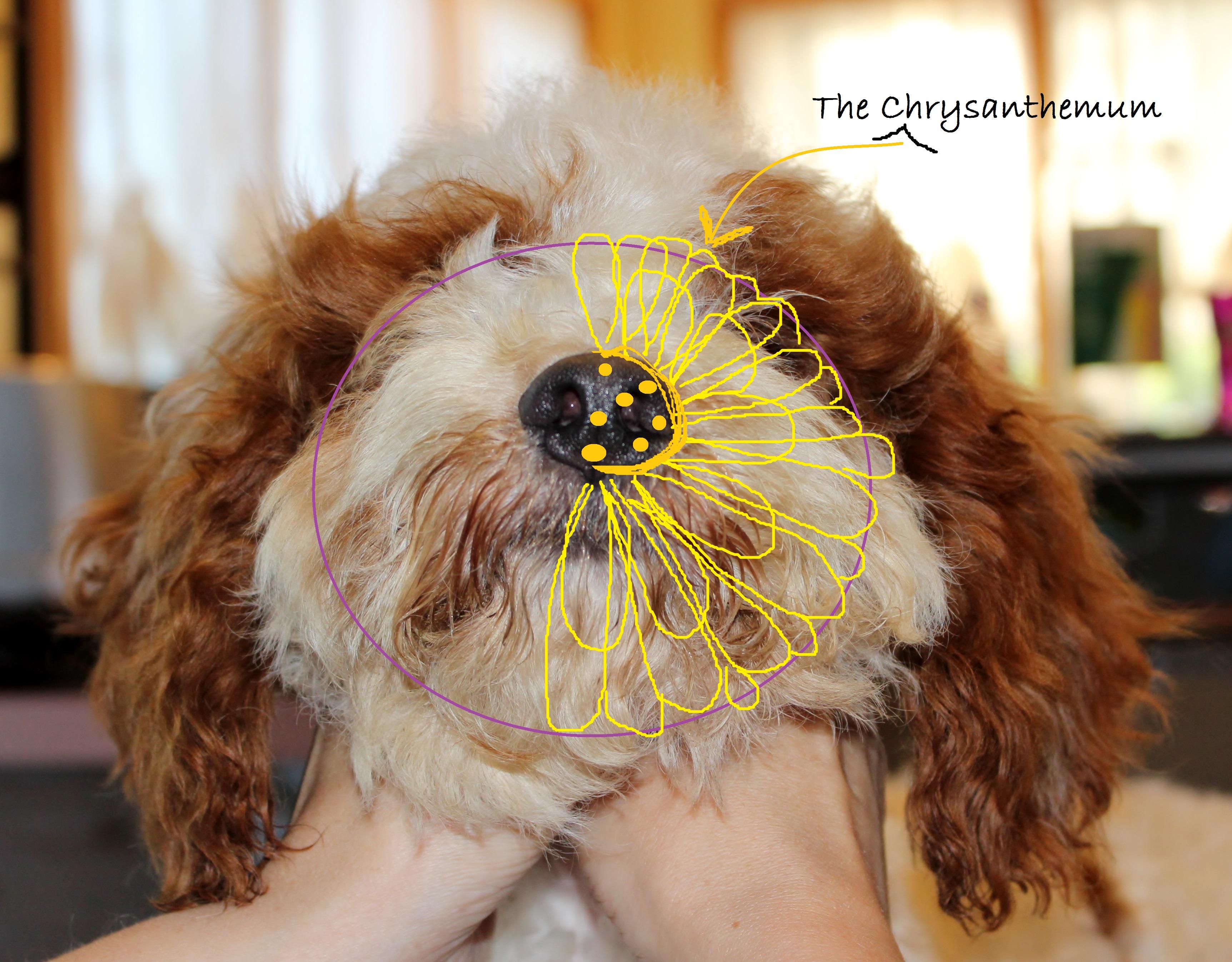 anatomy – chrysanthemum – with marks | Eden Dog