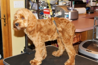 Jake finished first groom (2)